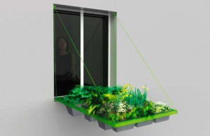 volet-vegetal-hanging-in-window