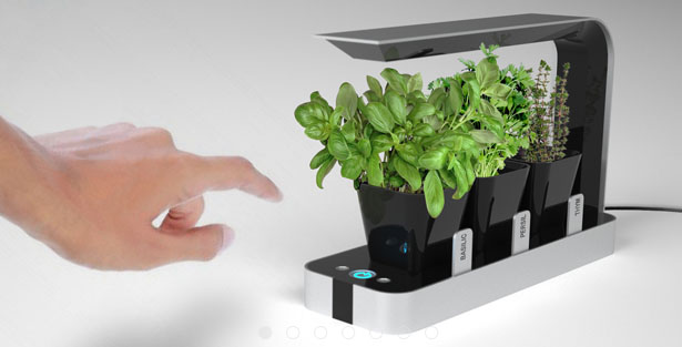 Countertop Herb Garden Kit : garden ? Search Results ? Shoebox Dwelling Finding comfort ...