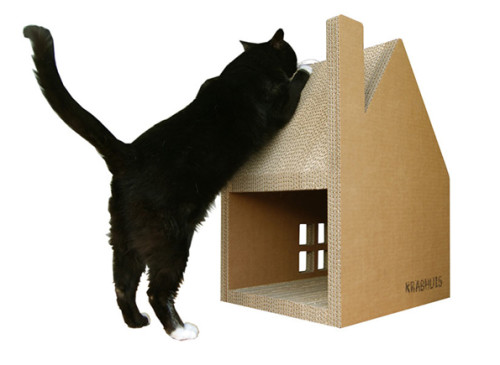Scratch-House-cats-1