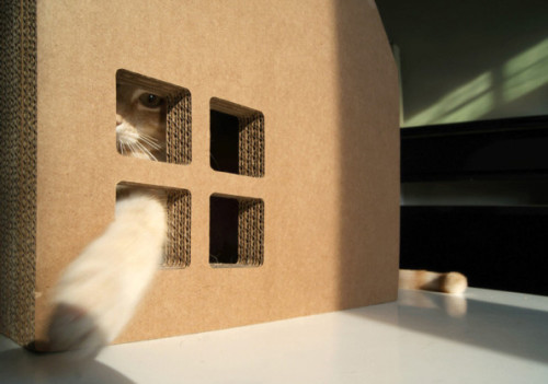 Scratch-House-cats-3