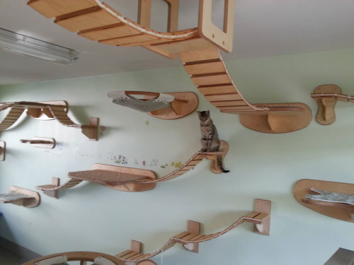 ceiling-furniture-for-cats-by-goldatze-gold-paw-11