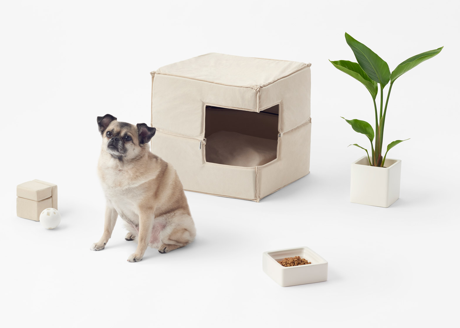 Minimalist dog accessories shoebox dwelling finding comfort style and dignity in small spaces - Pets for small spaces style ...